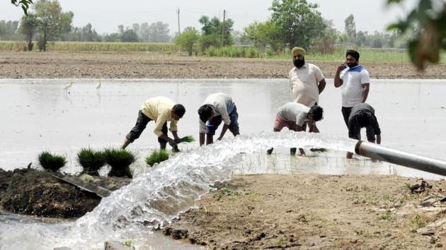 Punjab farmers' over-dependence on water-guzzler paddy is one of the major reasons of depleting groundwater level.(Pardeep Pandit/ / HT Photo)