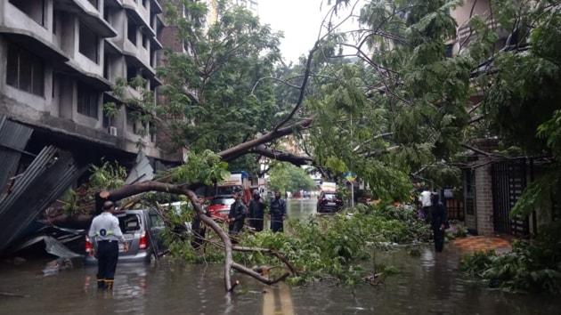 A tree that collapsed due to rains, at Tilak Nagar in Mumbai's Chembur.(Kunal Patil / HT Photo)