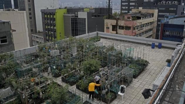 Persons having not less than 300 square feet area on roof top would be eligible for Bihar government's roof-top farming project.(AP File / Photo used for representational purpose only)