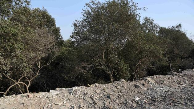 Maharashtra's mangroves committee had identified 15 reclaimed locations that needed to be restored in November.(HT Photo)