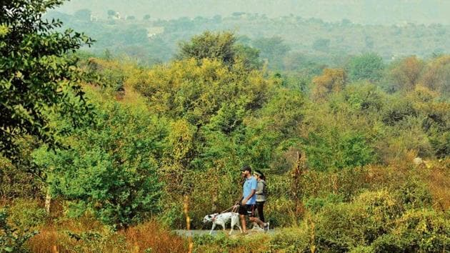 The sighting of endemic Indian birds in the park show that bioremediation has brought back a large number of native species.(Parveen Kumar/HT Photo)