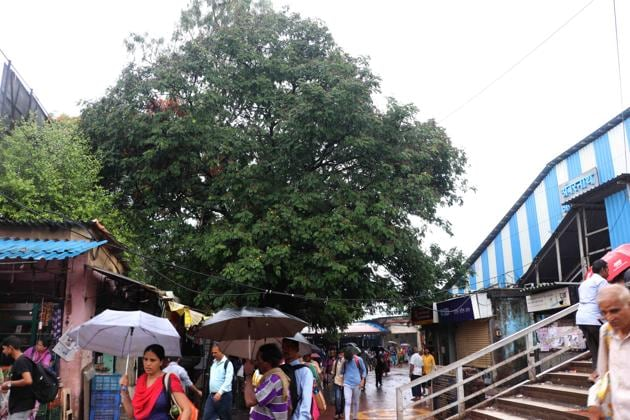 In April, CR had written to the AMC, asking for permission to cut the trees which are on the station's eastern side, so that it can add additional tracks and infrastructure.