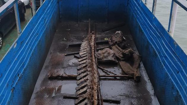 The Cuvier's beaked whale skeleton was transported via ferry and then a truck.(HT PHOTO)