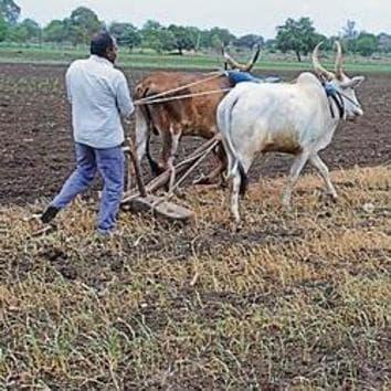 Farmer Mohan Narvade at his farmland.(Laxman Narnale/HT)