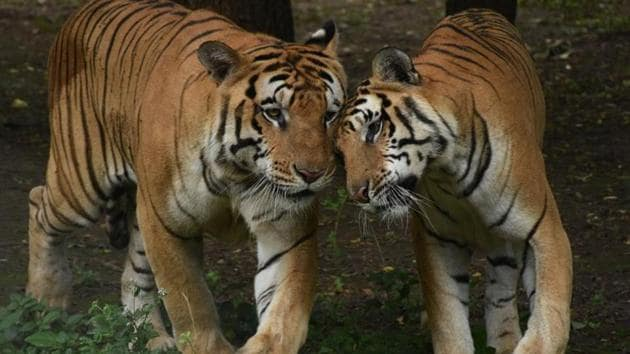 The new numbers have brought cheer to wildlife enthusiasts and conservationists.(ANI file photo)