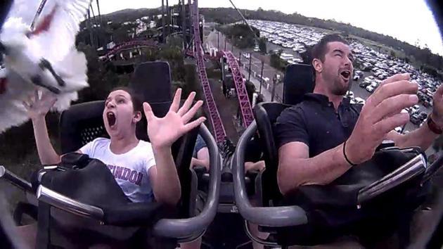 Bird slams girl during a roller coaster ride.(Facebook/Nicole Ormiston)