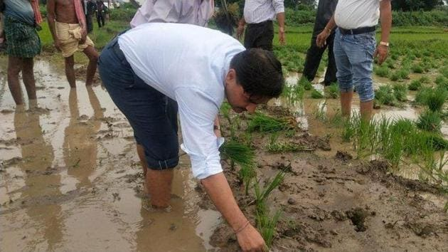 District collector of Ganjam district planted saplings.(HT photo)