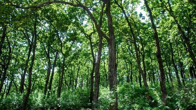 Conservation activities are taken up as per a working plan of the forest department but dwellers are allowed to collect produce or claim economic benefits from the conservation efforts taken up together.(HT FILE)