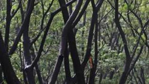 The Brihanmumbai Municipal Corporation had sent a proposal to the Ministry of Environment and Forest (MoEF) for submergence of 719 hectares of forest for the Gargai Dam Project.(HT Photo)