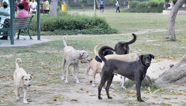 Ludhiana, India – June 06, 2019 : A view of stray dogs in Ludhiana on Thursday, June 06, 2019. (HT Photo)(HT FILE Photo/ Representative Image)