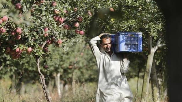 Kashmir is India's largest apple grower with an average annual production of nearly 2,200 metric tonnes. Apple industry fetches revenue of nearly Rs 1,300 crore, according to a state government website.(HT image)