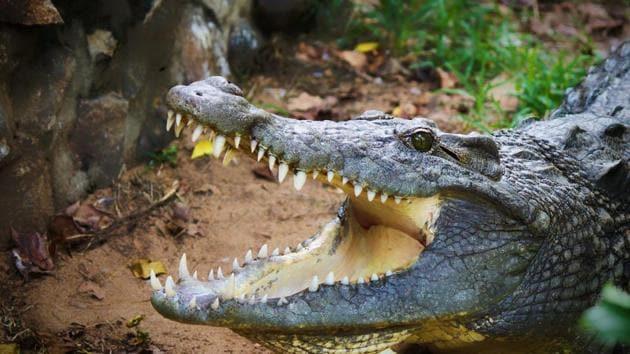 The farmer was fishing in a creek near Jalakana village in Mahakalpada area on Sunday when the eight-feet-long reptile pounced on him, the official said.(Representational Image)