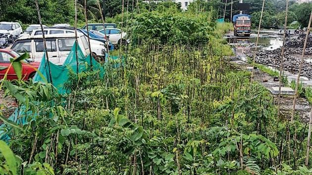 Miyawaki plantation inside Central Railside Warehouse Company Limited at Goregaon in Mumbai, India.(Photo: Hindustan Times)