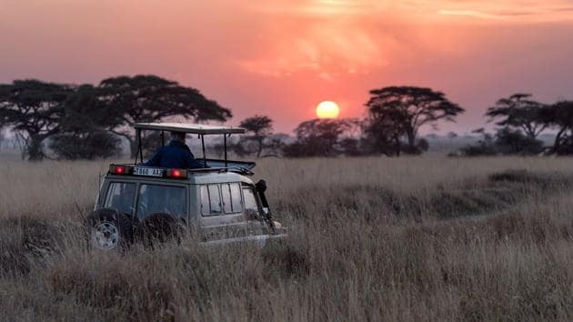 Do's and don'ts while planning your next wildlife safari trip