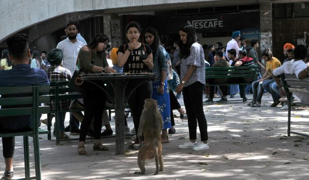 Students and faculty have been complaining of the growing monkey attacks at the university.(HT FILE PHOTO)