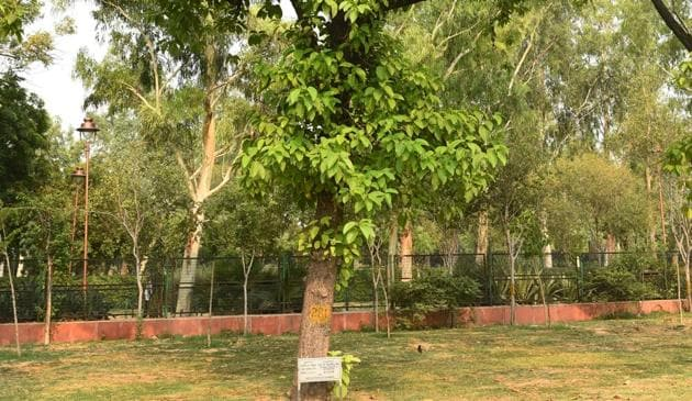 The officials and representatives are also directed to pay the value of the tree that has been felled after being assessed by the Range Forest Officer, Sadar East and it will be deposited to the government exchequer in the form of forest revenue.(Vipin Kumar/HT PHOTO)
