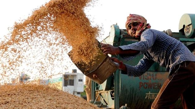 Purchase of paddy crop by government agencies has started at only three centres — Rajpura, Nabha and Samana — in the district.(HT PHOTO)