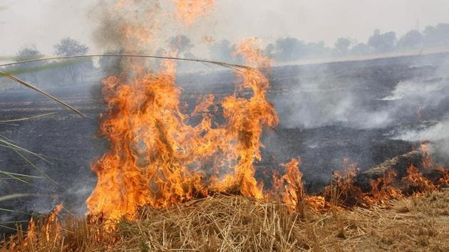 Besides registration of a criminal case for stubble burning, the national green tribunal (NGT) has also taken a stringent view of the matter.(HT File Photo)