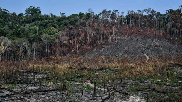 Where virgin forest once stood, herds of Brahman cattle graze on pasture or huge machines harvest grain. Newly deforested areas were scorched by recent blazes that singed the primary forest, despite a burning ban in the Amazon following an international outcry. The smell of smoke hung in the air until the rains finally came. The highways, and dirt roads branching off them, have fueled illicit activities in the region, such as wildcat mining and land grabs. (Nelson Almeida / AFP)