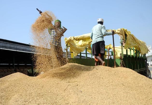 A labourer unloading paddy at the grain market in Patiala on Friday.(HT Photo)