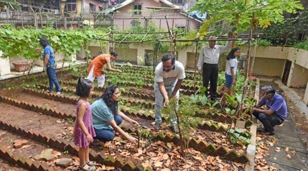Organic kitchen garden(Pratik Chorge/HT PHOTO)