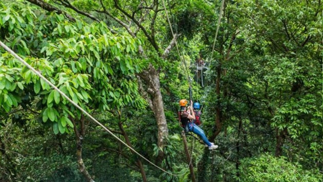 Queensland Ambulance Service has confirmed the woman had injuries to her shoulder and arms, including pelvic injuries.(Facebook image/ Jungle Surfing Canopy Tours)