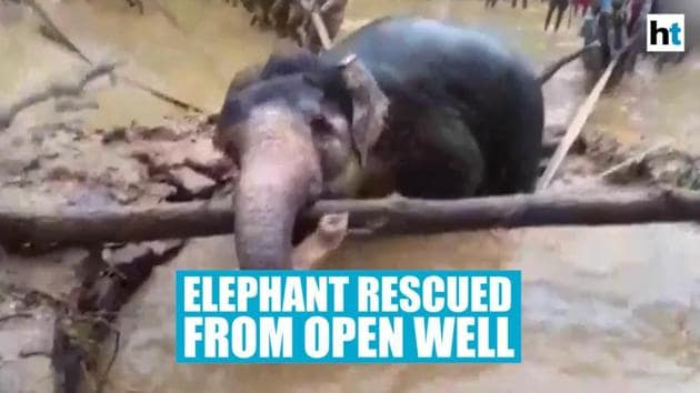 Forest officials along with locals conducted a 2 hour long rescue operation to save an elephant which had fallen into an open well in Odisha's Sundargarh district. The elephant could be seen struggling to get out of the well and grabbing a branch as well. Forest officials used long ropes to help the elephant out of the open well.