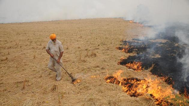 Farmer burning paddy stubble on Sangrur Road in Patiala on Wednesday.(ht photo)