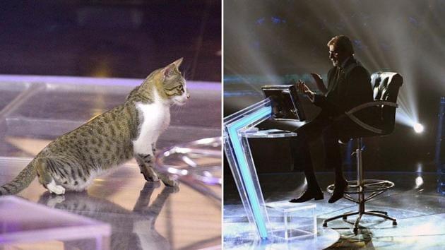 Amitabh Bachchan tweeted about a cat roaming on Kaun Banega Crorepati 11's set.(Twitter/@SrBachchan)