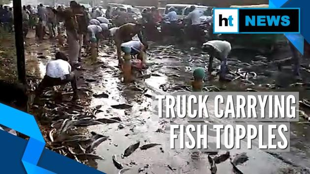 A video of people picking fish from road went viral on Tuesday. Hundreds of live fish spilt on a busy road in Kanpur. The incident happened after a truck carrying fish toppled midway. Locals were seen putting fish inside shopping bags and buckets to take home.
