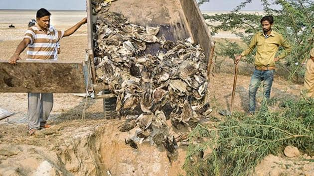 Civic workers prepare to bury birds, which were found dead at the Sambhar Salt Lake in Rajasthan, on November 12.(Photo: PTI)