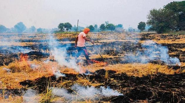 Punjab saw more farm fires this time than last year. Its farmers are being blamed for the air pollution crisis in north India in the past few weeks.(HT Photo)