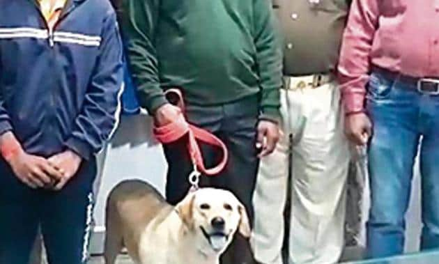 The labrador tracked the accused in 20 mins, say cops.(HT Photo)
