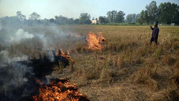 To farmers, this is the cheapest way of clearing their fields in a short period before the wheat crop's sowing season starts. However, severe air pollution leads to a health emergency(ANI Photo)