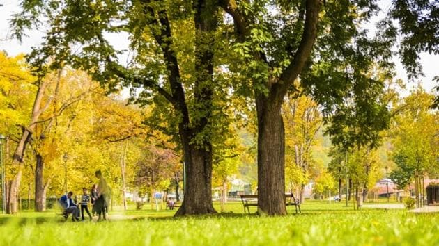 Nearly all studies investigating the effects of natural environments on human health are focused on the amount of a community's green space.(Unsplash)
