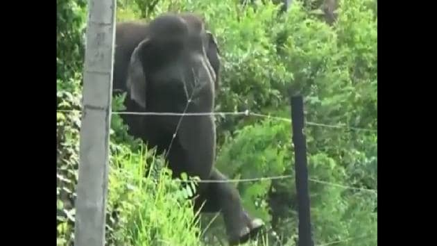 The image shows the elephant trying to break the electric fence.(Twitter/@Dr. PM Dhakate)