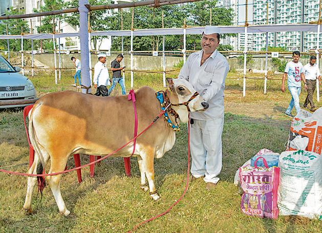 Kondaji Sanas, owner of Panganur breed cow, at the World Cow Conference and Agri Expo at Balewadi on Friday.(Milind Saurkar/HT Photo)
