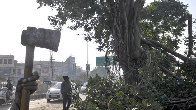 The axed tree on Ferozepur Road in Ludhiana on Tuesday.(Harsimar Pal Singh/HT)