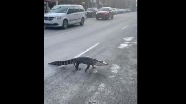 The reptile allegedly broke free from an exotic animal relocation van and made a run for the streets.(Twitter/@mayssamsamaha)