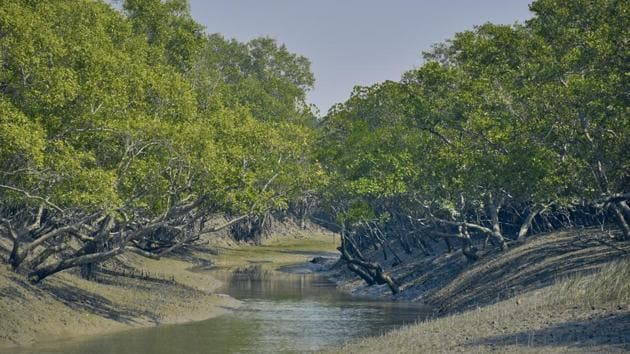 The Sunderbans is the world's largest mangrove delta and home to the Royal Bengal Tiger.(GETTY IMAGES/iStockphoto.)