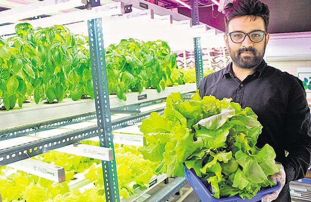 Rohit Nagdewani currently has a 6,600 sqft indoor farm.(HT/PHOTO)