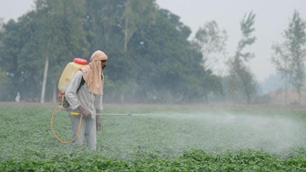 A labourer spraying pesticides on newly cultivated potato crop amid cold in Kala Lallian Kalan village, Jalandhar, on Thursday.(Pardeep Pandit/HT)