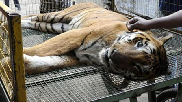 The carcass of the tiger was found in the Mhadei Wildlife Sanctuary.(Representative image/HT Photo)
