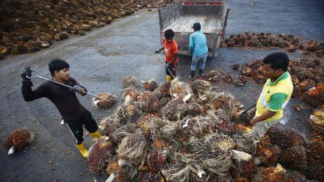 India imports more than nine million tonnes of palm oil every year, mainly from Indonesia and Malaysia, the two biggest exporters.(Reuters File Photo)