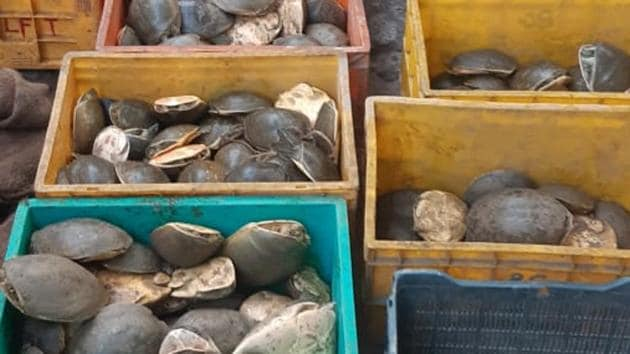 Close to a thousand endangered turtles were seized from a West Bengal market on Sunday morning in a joint raid.(HT Photo)