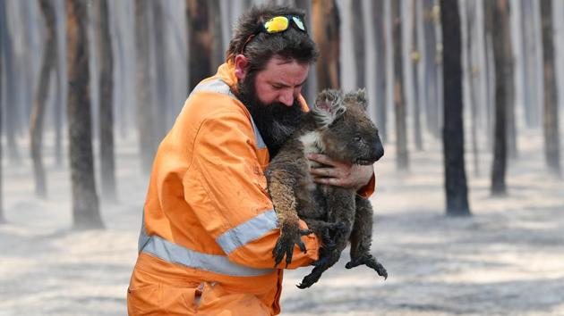 Adelaide wildlife rescuer Simon Adamczyk is seen with a koala rescued at a burning forest near Cape Borda on Kangaroo Island, southwest of Adelaide, Australia, January 7, 2020.(Reuters file photo)