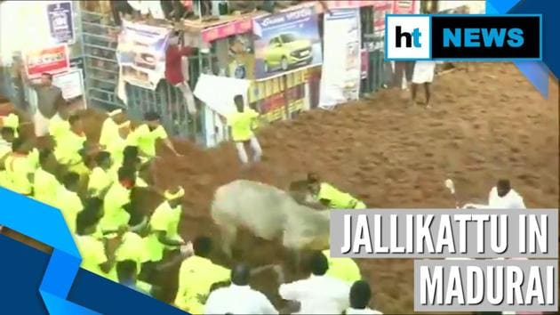 Jallikattu is underway in parts of Tamil Nadu. People gathered in large numbers to watch Jalikattu in Alanganallur. Feisty bulls one after other start racing towards lengthy sporting arena from entrance while young men try to latch on to the animal's hump and tame it. More than 700 bulls and 750 participants take part in the competition. Over 2000 police personnel have been deployed for security.