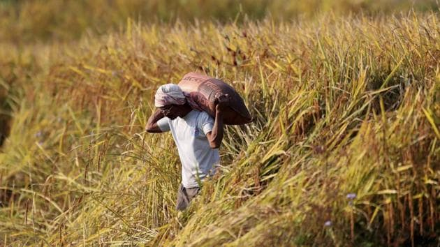 A farmer carries paddy seeds in a sack in Umwang village, on the outskirts of Gauhati, India.(AP)