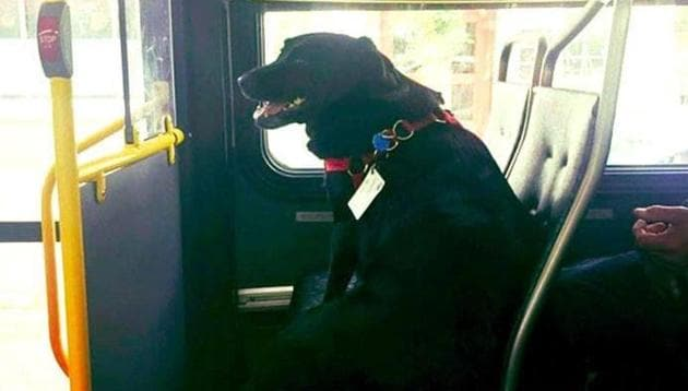 Eclipse, takes the bus all alone every day for a trip to a park in Seattle.(Facebook/@Robbie Lauren)
