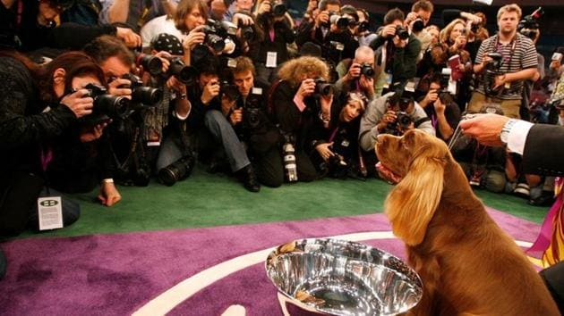 FILE PHOTO: Stump, a Sussex Spaniel, poses for photographers after winning Best in Show at the 2009 Westminster Dog Show in New York, U.S., February 10, 2009. REUTERS/Lucas Jackson/File Photo(REUTERS)